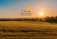 Valmark Orchards Devanahalli Main A